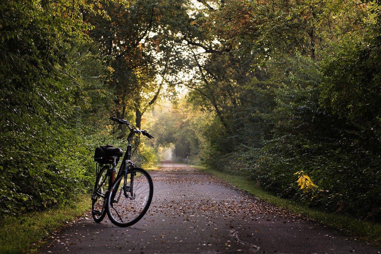bike, trail, bicycle-2769021.jpg